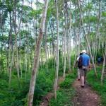 Guided Bedulu walks